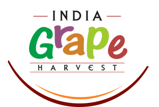 India Grape Harvest